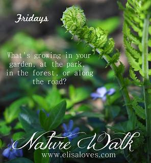 Nature Walk (2)