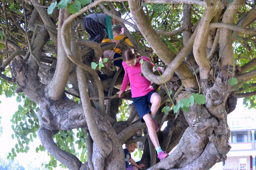 dybk july tree